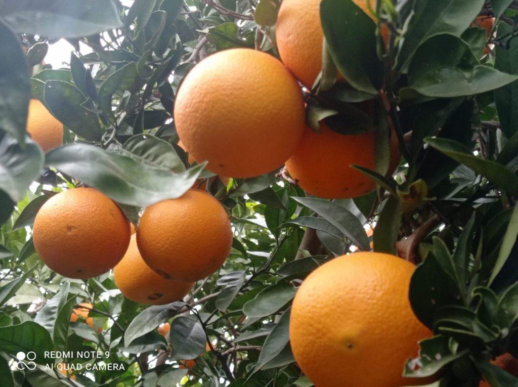 Foto de Naranjas La Torre
