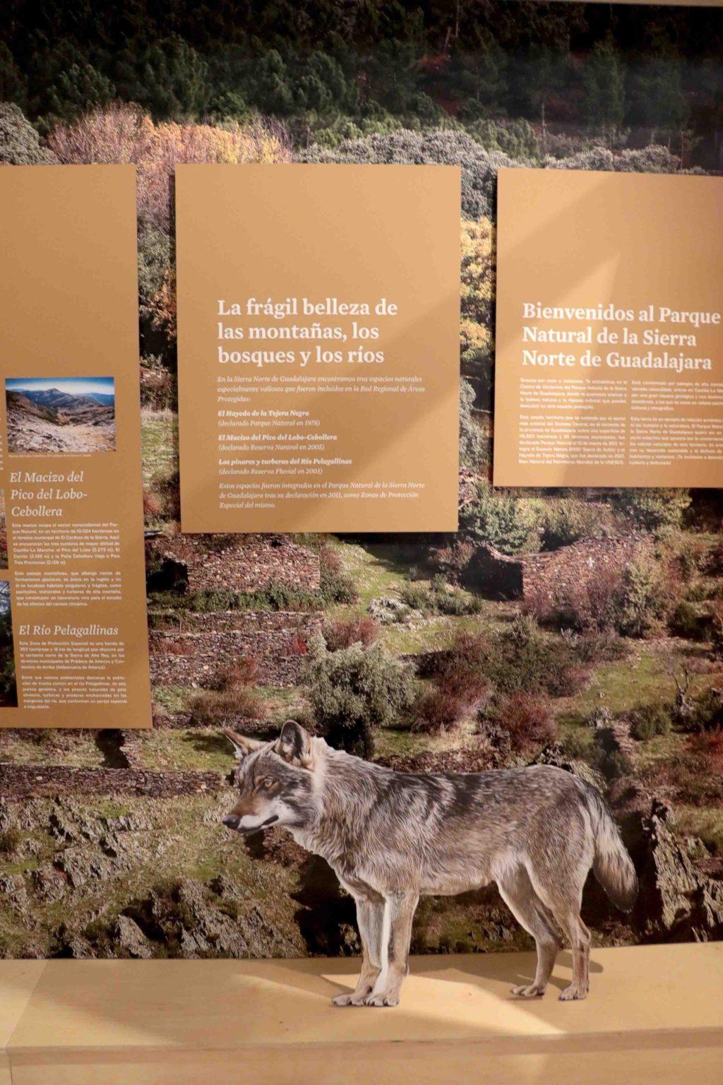 Foto de Cogolludo, puerta abierta al Parque Natural de la Sierra